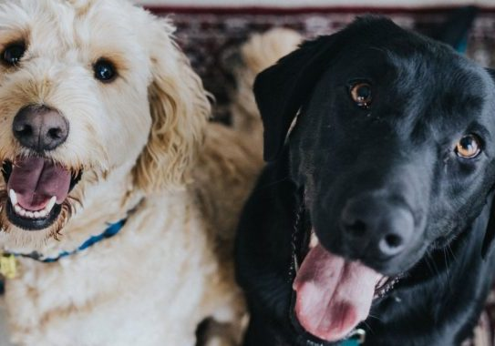 Image of dogs